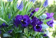 Foto's flowers,butterflies en birds enz.