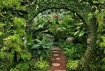 My sweet flower garden!