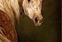 Animals - Horses - Misc