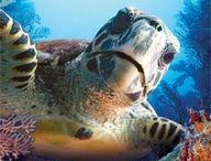 Sea Life / by www.WhereToStay.com