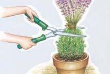 řezy rostlin