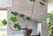 Green Plants Interior
