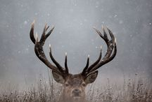 Hunting guns and deer