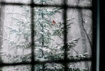 Jack Frost / The magic of snow and how it changes everything it touches. / by Lise Cavelia