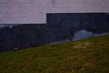 Illusions ~ Woodland Mills Photography / Art photography