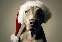 Dog Christmas Photo Ideas