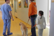 pet therapy / Experience of Meyer Children's Hospital (Florence)
