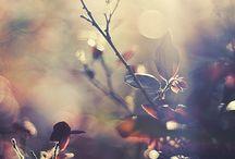 Φθινοπωρα