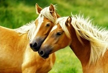 Horse Love / Please invite other horse loving pinners. / by Carol Ann Collier