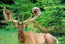 Weird animal frenships
