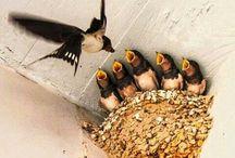 birds  ( uccelli)