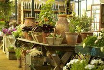 Cuidado de cultivos, huertas organicas y jardines