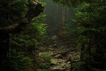 OG FOREST