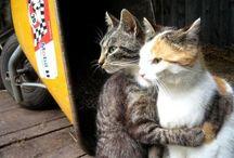 Awwwee animals :)