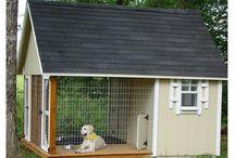 καταφυγιο σκυλων