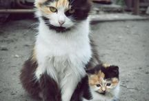My love for Cats / Cats, cats and cats < Feline :)