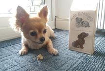 The pets of Healthful Pets / Take a look at some of our customers cute pets. They all love our products!