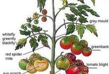hastalıklar bitki