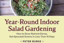 Salad gardening