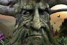 Erikoiset puut