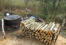 Woodland Survival