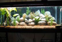 Fish tank ideas