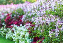 Flowers / fotos