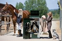Zadelkasten / Uitgebreid assortiment zadelkasten bij Nedlandic. Voor elk zadel is wel een zadelkast te bestellen. Voor een pony zadel maar  ook voor exclusieve western zadels. Naast de gewone zadelkasten zijn er ook diverse concourskasten verkrijgbaar.