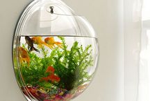 Home Aquarium Ideas