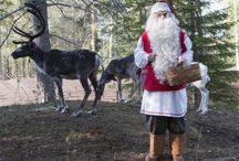 Summer in Santa Claus Reindeer Resort / In Summertime you can also visit the reindeer of Father Christmas here in the Santa Claus Reindeer Resort. Welcome the the Santa Claus Village at the Arctic Circle in Rovaniemi in Lapland also in summer