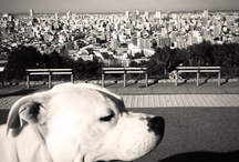 Dogo Aegentino / the best dogs in the world!