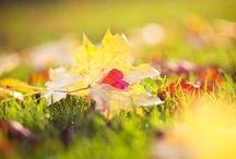 Nature & Landscapes / Nature & Landscapes Stock Photos Free Download