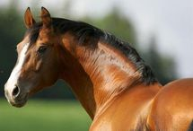 Equine / by Dani Hoagland