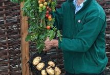 Warzywnik  / Inspiracje dotyczące ogrodów warzywnych
