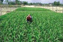 Agriculture cultivation