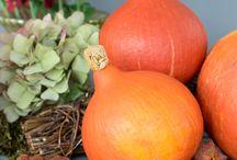 Foodistas - Herbst auf dem Teller / Der Herbst zieht bei den Foodistas ein