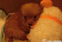 HaDou / My lovely dog