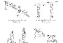 triceps, biceps