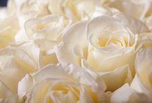 Flowers / Gewoon mooie plaatjes van de wonderen der natuur.