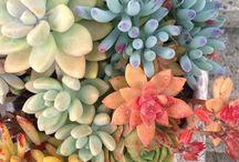 •Plants•flowers•