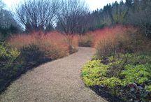 Wintertuin / Foto's van verschillende tuinen in winterse omstandigheden.
