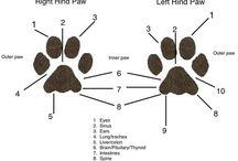 Dogs anatomy