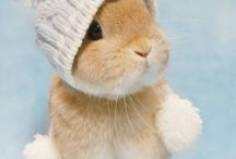 #Rabbits!!