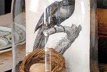 Bird in glass