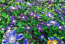 12. Garten (Bodendecker & Kissen) / Bodendecker