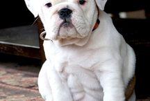 puppys ♡