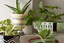Plants/garden/pots