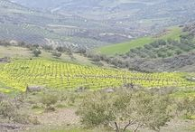 vineyards @Lyrarakis Crete