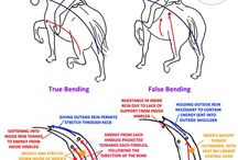 horse-learning dressage