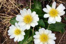 Flora / Wild flowers